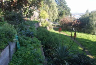 ... And Parks Department Urban Agriculture Website. The Dogpatch/Miller  Memorial Garden Are Owned By The San Francisco Recreation And Park  Department.