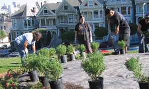 Planting at Alamo Square Park